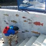 fish3crop