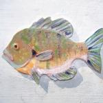 fish9crop
